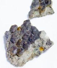 hadrosaur-skin