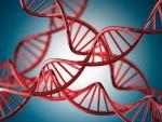 11241-DNA