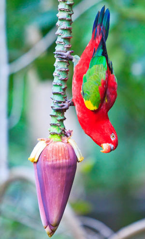 climbing-parrot