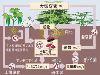 11470-nitrogen-cycle-japanese