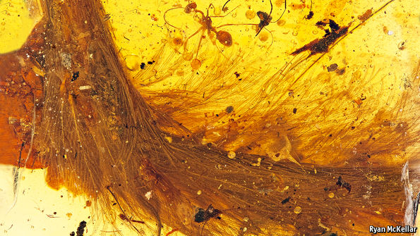 myanmars-amber-mines-dinosaurs-tail-preserved-amber