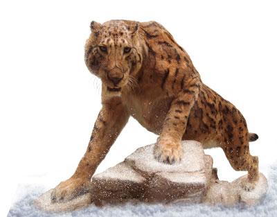Siberian-lion