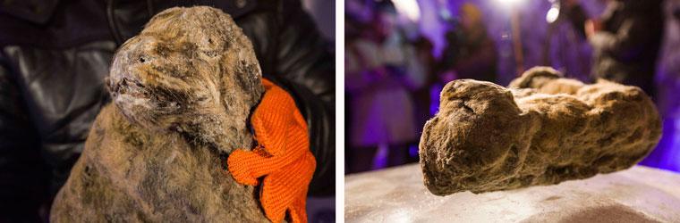 two-extinct-cave-lions-uyandina-lge