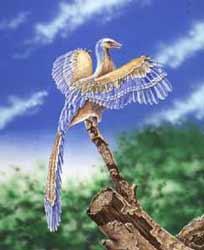 11844-E-archaeopteryx