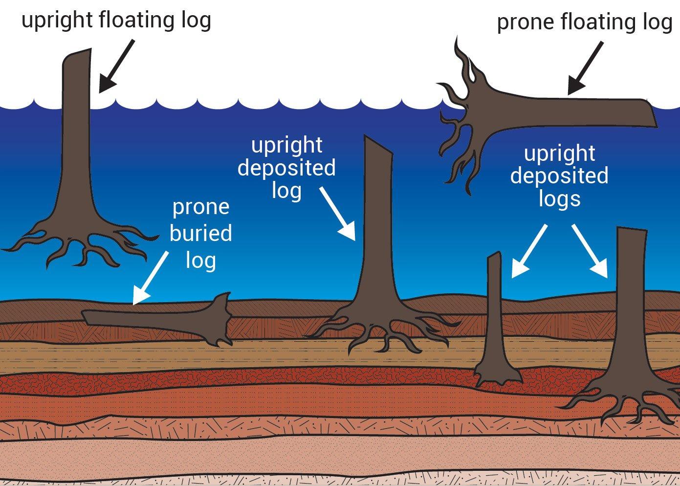 11976-logs