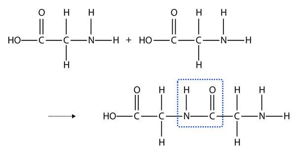 Fig3Reaction