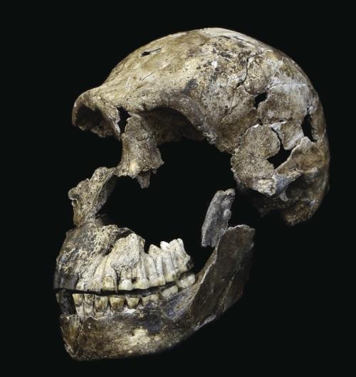 Figure_2_LES1_Neo_skull_Homo_naledi_from_Lesedi_Chamber_-_John_Hawks_Wits_University
