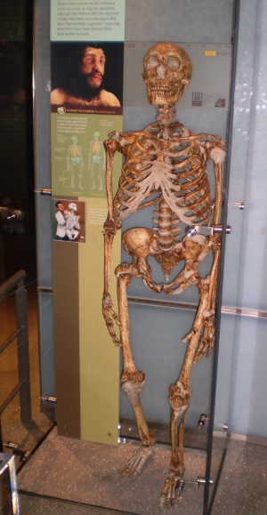 Figure_4_Composite_replica_Neanderthal_Skeleton_AMNH_2009