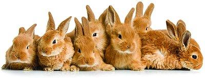 12064-rabbits
