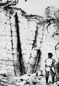 eah-ch5-trees
