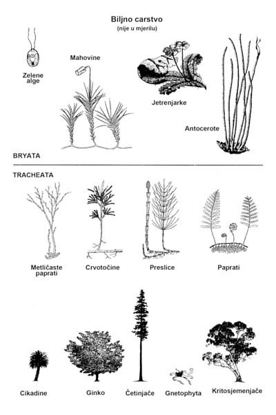 12303-plant-diagram-croatian