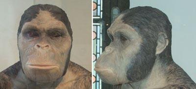 12348Australopithecus-africanus