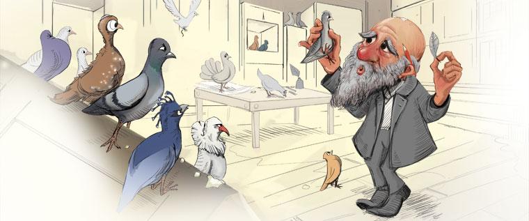 darwin-pigeon