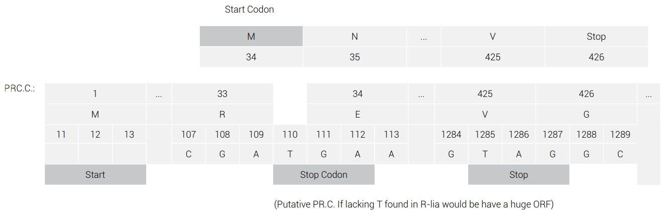 Nylon-eating bacteria: Refuting Ohno\'s frame-shift theory - creation.com