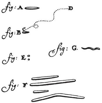 Leeuwenhoeks-mouth-bacteria