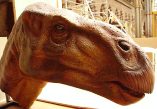 Iguanodon_head2