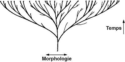 12558-tree