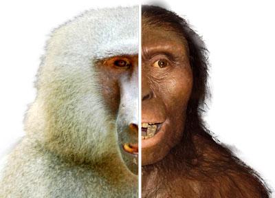 Lucys-baboon-backbone