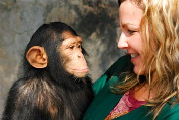 human and chimpanzee