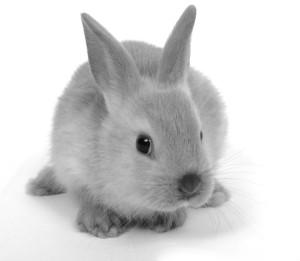 12617-bunny