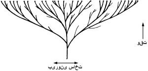 12617-tree