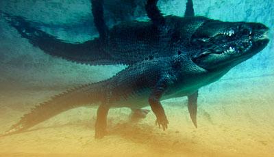 Crocs-down-under