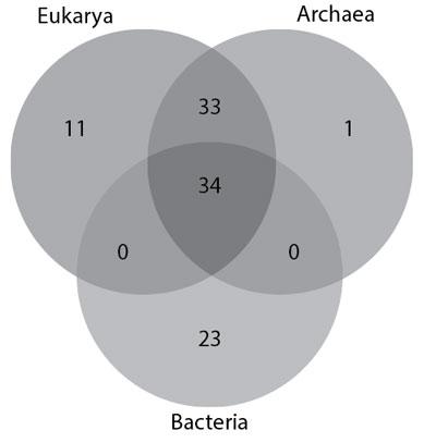 Eukarya-Archaea-bacteria