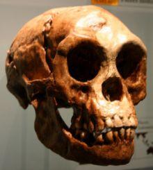 flores-skull