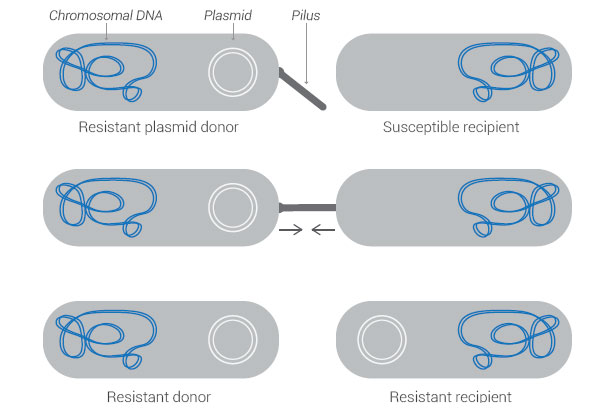 resistant-donor-recipient