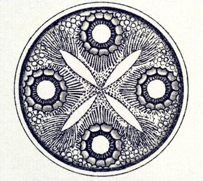 circular-diatom