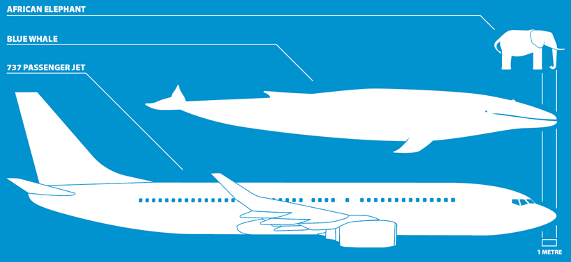 blue-whale-compare-with-plane-elephant