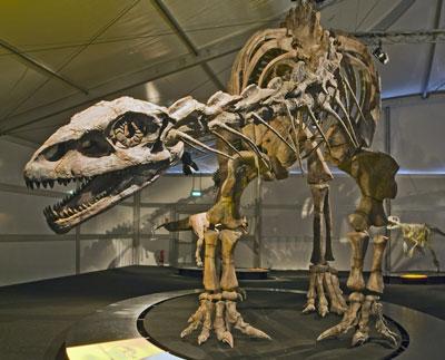 Lessemsaurus-Senckenberg