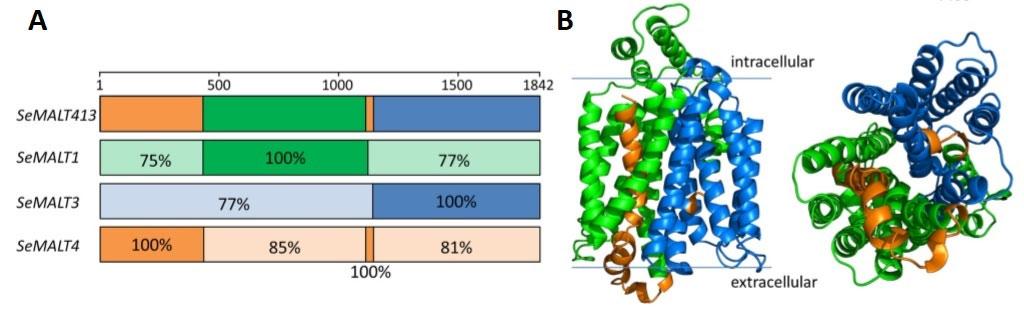 New sugar transport gene evolved in yeast? - creation com