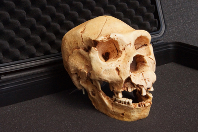 Cast-of-Homo-heidelbergensis-Skull-Atapuerca-5