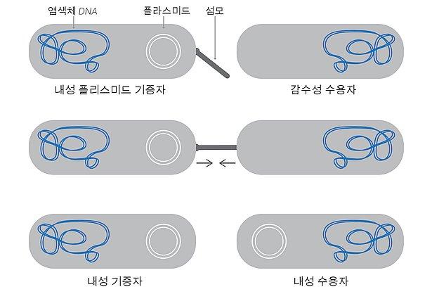 13343-gene-transfer
