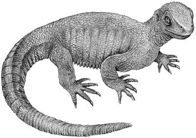 tetrapod-drawing