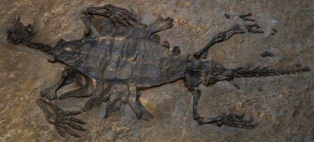 tetrapod-fossil