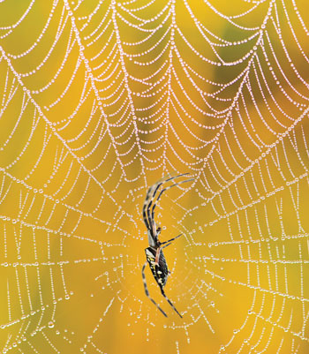 13961spider-silk