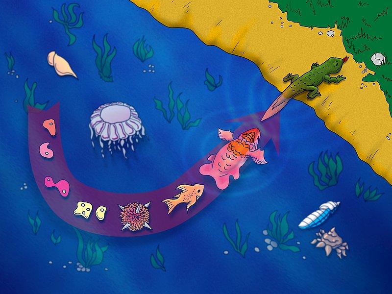 13984-fishy