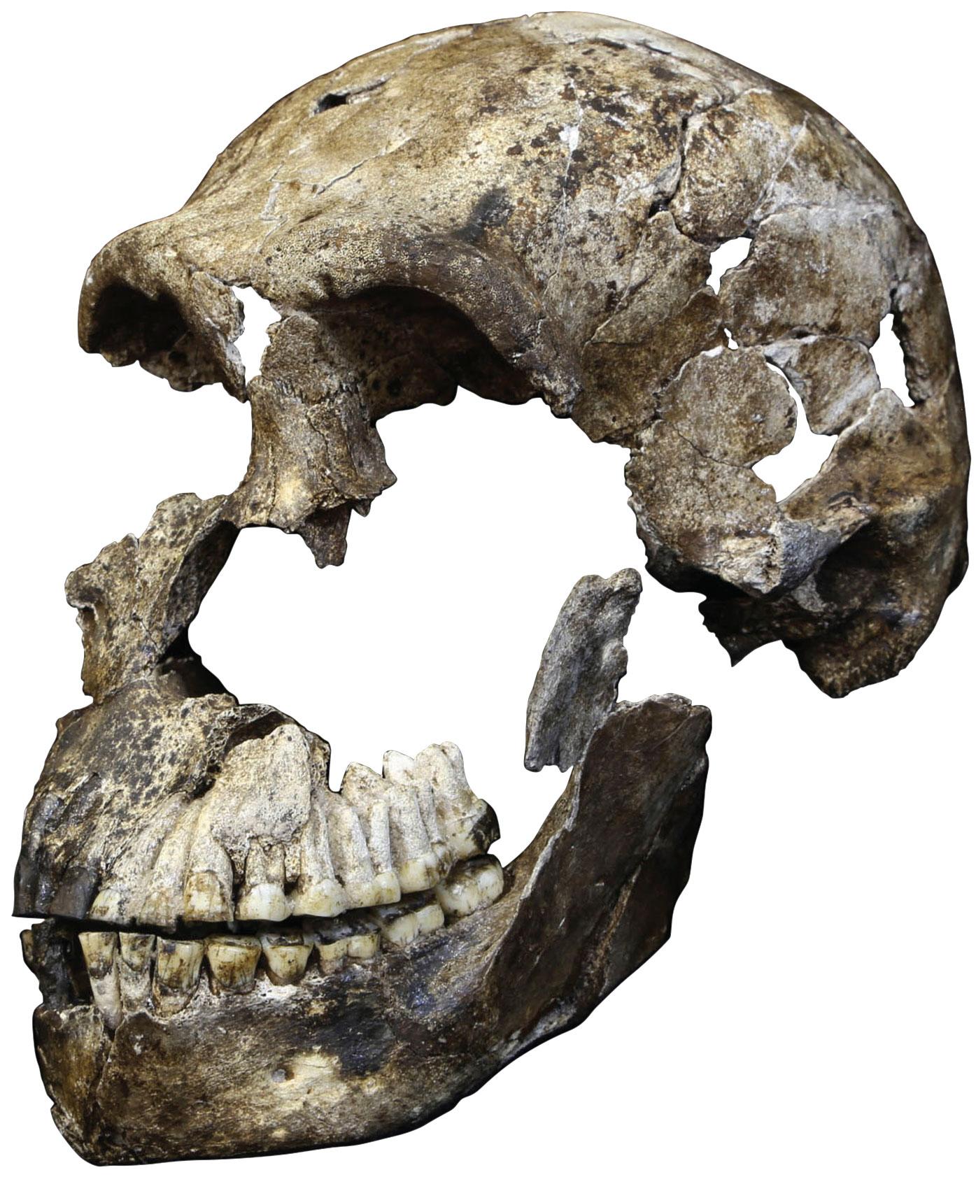 LES1-Homo-naledi-skull