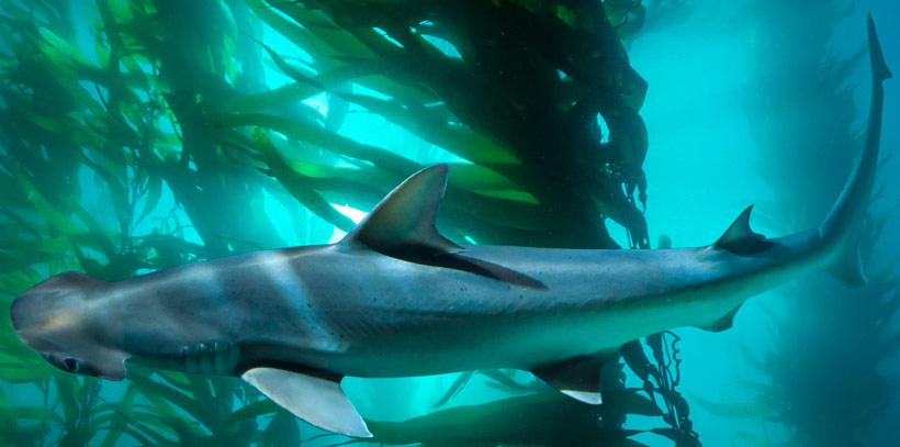 salad-eating-shark