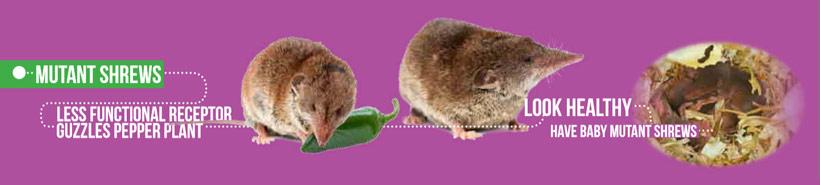 mutant-shrews