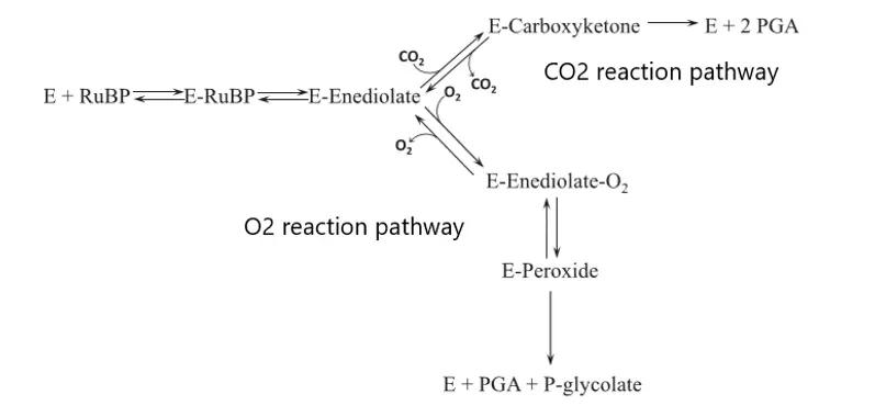 reaction-pathway