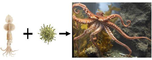 cosmic-octopus