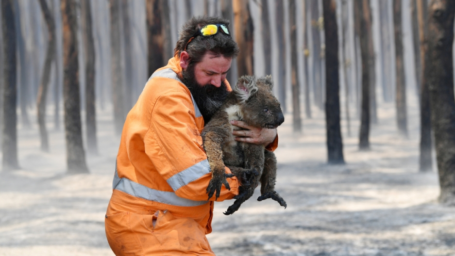 2020-01-07-australia-fires-wildlife