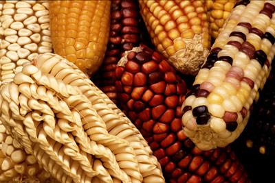 mutated-maize