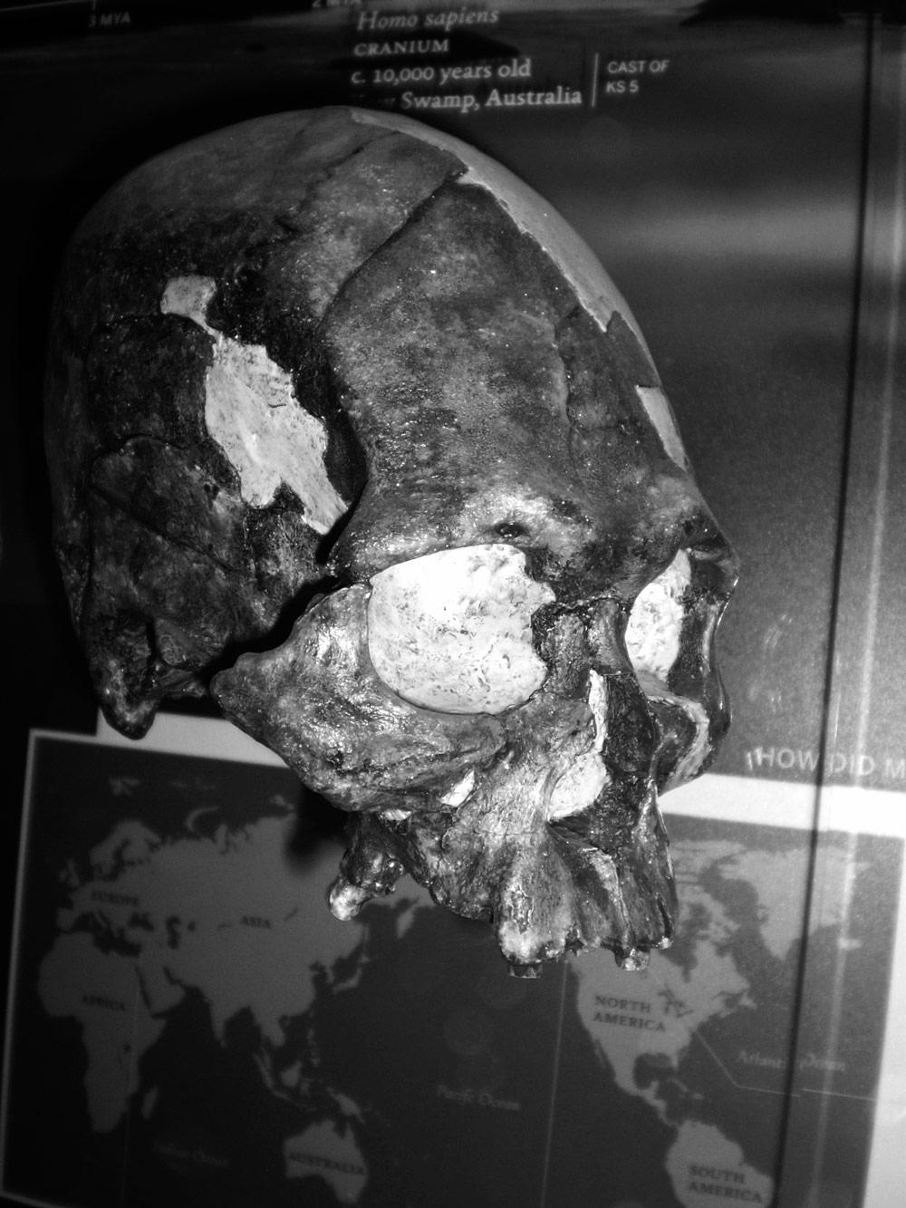 Homo-sapiens-cranium-Kow-Swamp-KS5