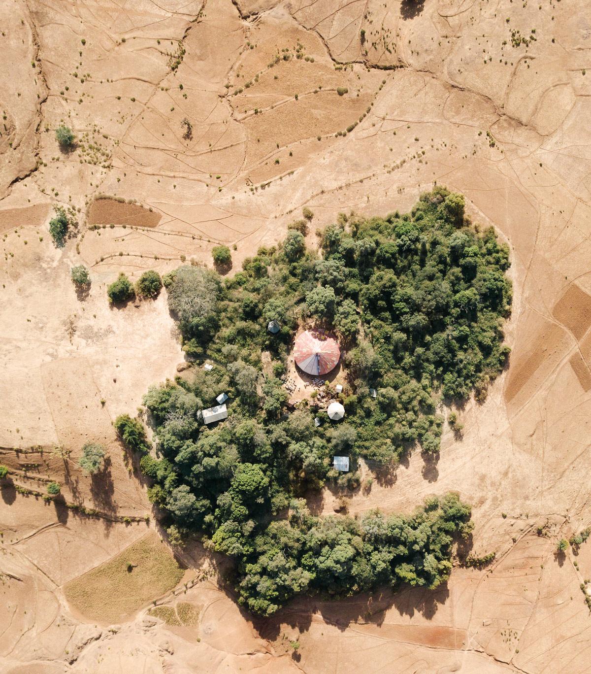Ethiopias-forest