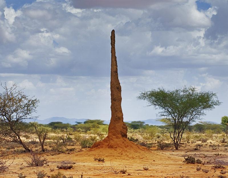 mature-termite-mound