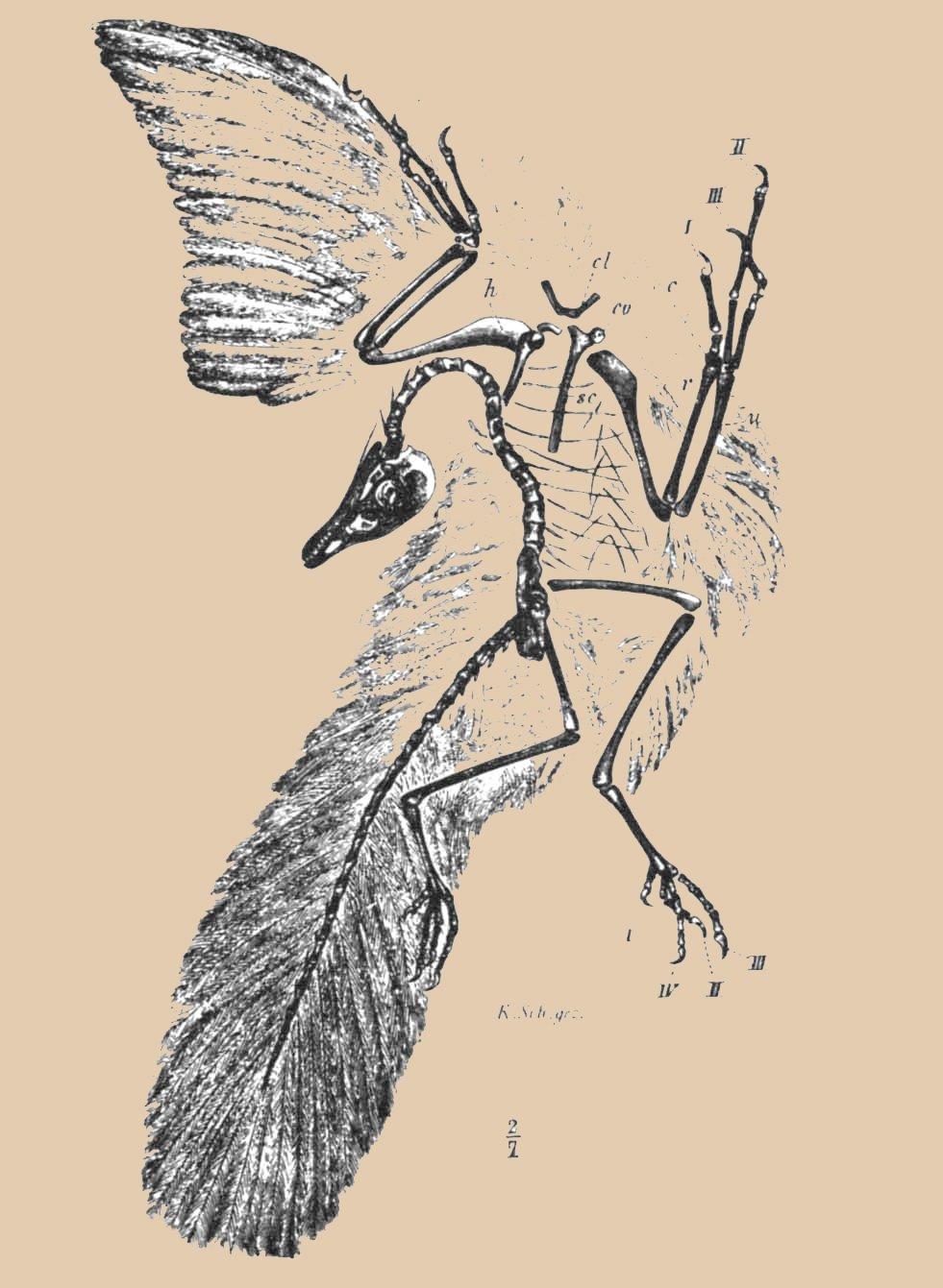 14235-archaeopteryx